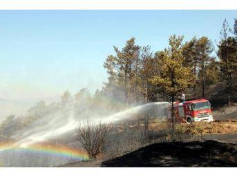 Oltu'da 10 Hektar Orman Yandı