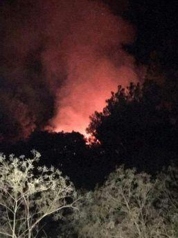 Kınık'ta Orman Yangını