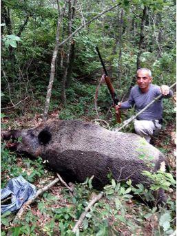 Avcılar 200 Kilo Ağırlığında Yaban Domuzu Vurdu
