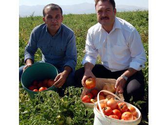Bitlis'te Domates Bereketi