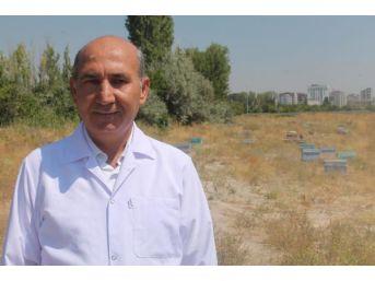 Prof.dr. Akyol: Yanlış Ilaç Kullanımı Bal Ihracatını Etkiliyor