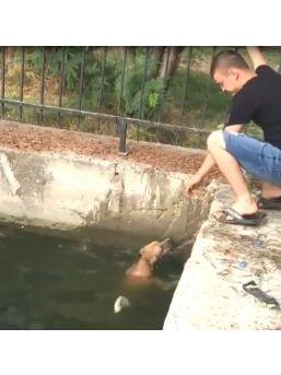 Seyhan Nehri'ne Düşen Köpeği Vatandaşlar Kurtardı