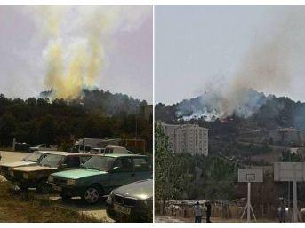 Bozüyük'te Orman Yangını