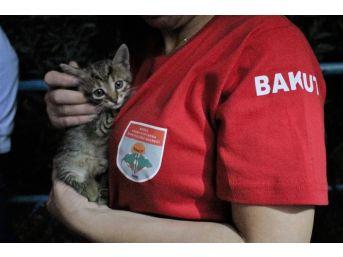 (özel Haber) Metro İstasyonunda Kedi Kurtarma Operasyonu