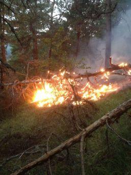 Yıldırım Düşmesi Sonucu Ormanlık Alanlarda Yangınlar Çıktı