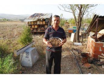 Hisarcık'ta İlk Defa 'arı Ekmeği' Üretildi