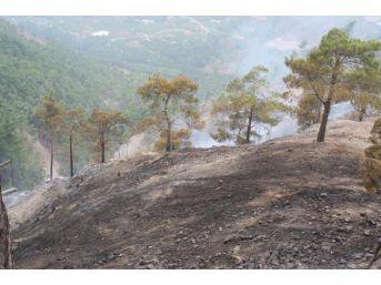 Mersin'de 19 Dönüm Orman Yandı