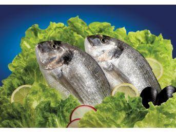 Her Üç Balıktan Birini Bodrumlu Balıkçılar İhraç Edecek