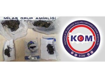 Milas'ta Uyuşturucu Operasyonu: 1 Gözaltı
