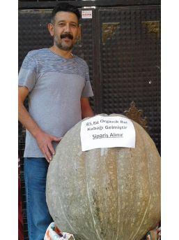 85 Kiloluk Bal Kabağı