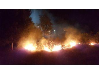 Samsun'da Ot Yangını Korku Ve Paniğe Sebep Oldu
