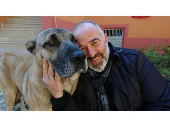 Trabzon'Da Boğuşan Köpekler Öldü, Sahipleri Davalık Oldu