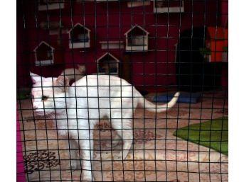 Aşırı Sıcaklar Van Kedilerini De Etkiledi