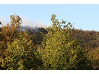 Zonguldak'ta Ormanlık Alanda Örtü Yangını