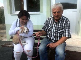 Muhtar Sokak Köpeklerini Sahiplendiriyor