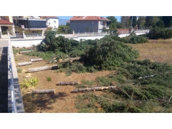 Meteorolojik Ölçümleri Daha Iyi Yapmak Için Ağaçları Kestiler