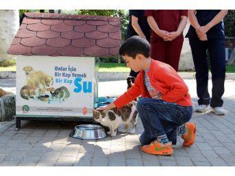 Ödemişliler, Sokak Hayvanları İçin Seferber Oldu