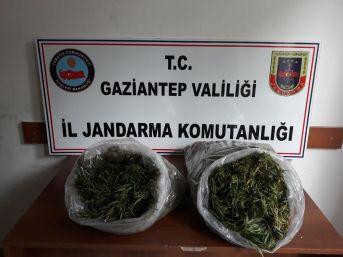 Gaziantep'te Evin Çatısına Ekili 32 Kök Hint Keneviri Ele Geçirildi
