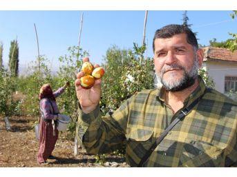 Rüyasındaki Meyveden 250 Ton Üretti