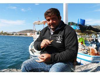 Balıkçılar Yunuslardan Şikayetçi