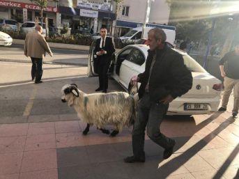 Keçisini Yanından Ayırmıyor