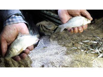 Su Birikintilerinde Mahsur Kalan Yavru Balıklar Kurtarıldı