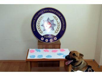 Tokat Merkezli Uyuşturucu Operasyonu: 12 Gözaltı...