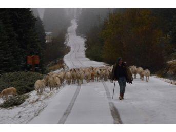 (özel Haber) Uludağ'a Kar Yağdı, Koyunların Zirve Kampı Erken Bitti
