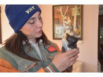(özel Haber) Evinde Onlarca Kedi Ve Köpekle Birlikte Yaşıyor