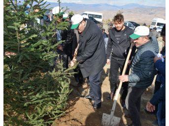 Suşehri'nde Hatıra Ormanına 5 Bin Fidan Dikildi