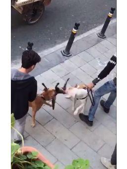 (özel Haber) Gaziosmanpaşa'da Yaşanan Pitbull Vahşeti Kamerada