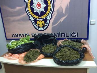 Marul İçine Uyuşturucu Koyup İzmir'e Getirmişler