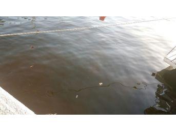Güllük Sahili Kahverengiye Boyandı