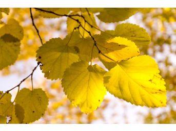 Belemedik Sonbaharda Bir Başka Güzel