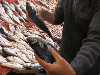 Aydın'da Balık Bolluğu