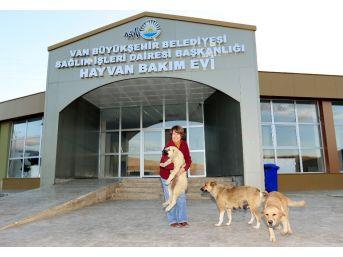 İşkence Edilen Köpeği İzmirli İş Kadını Sahiplendi
