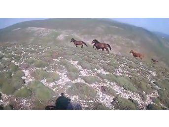 Dağda Karşısına Çıkan Yılkı Atlarıyla Yarıştı
