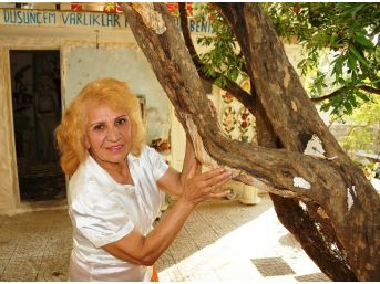 (özel) -türkiye'deki Çürüyen Tüm Ağaçları Kurtarmak İstiyor