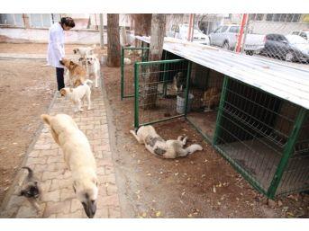 Sokak Hayvanları Kışın Üşümeyecek
