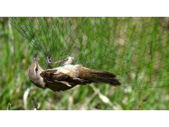 Kuş Halkalama Sezonu Sona Erdi