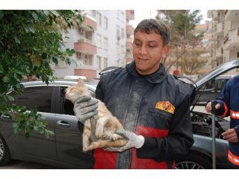 Aracın Motoruna Giren Yavru Kedi 2 Saatte Kurtarıldı