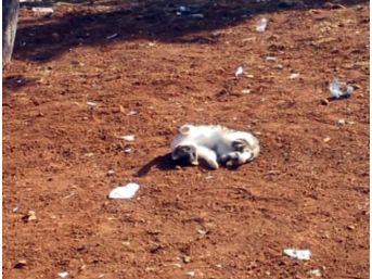 (özel Haber) Şanlıurfa'da Sevimli Hayvanların İlginç Görüntüleri