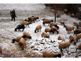 Kar Yağışından Etkilenen Koyun Sürüsü Köye İndirildi