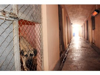 Sokak Hayvanlarına Isıtıcılı Koruma