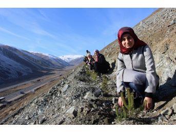 Erzincan'da Kyk'lı Gençler Gelecek İçin Fidan Dikti