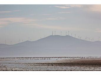 3 Günlük Yağış 3 Bin Kuşu Seyfe'ye Getirdi