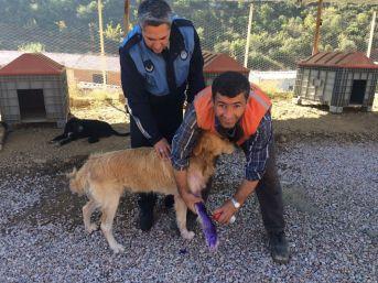 Simav'da 'geçici Köpek Yaşam Alanı' Kışa Hazır