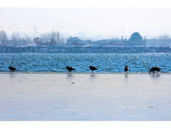 Van'ın Sıhke Gölü Buz Tuttu