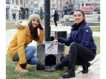 Öğrencilerden Harçlıklarıyla Sokak Hayvanlarına Sıcak Yuva