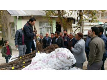 Sason'da 60 Bin Ceviz Fidanı Dağıtıldı
